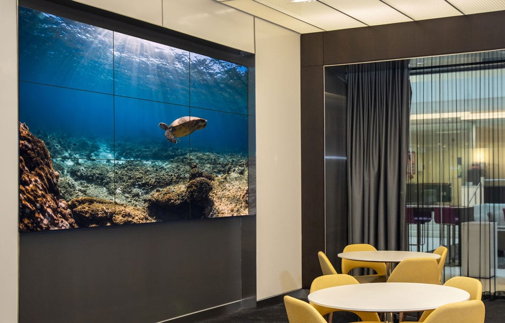 Video wall in a common area showing a sea turtle.
